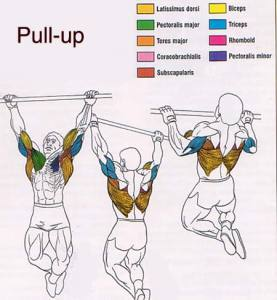pull up plan for beginners