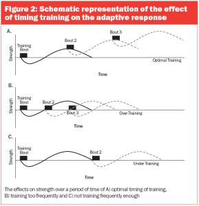 adaptive-training-response-muscle